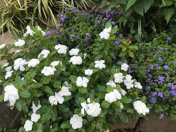 flower_8068a.jpg