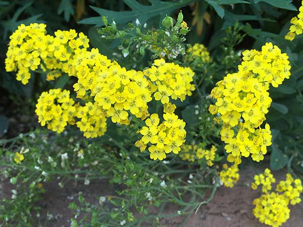 flower_8304b.jpg