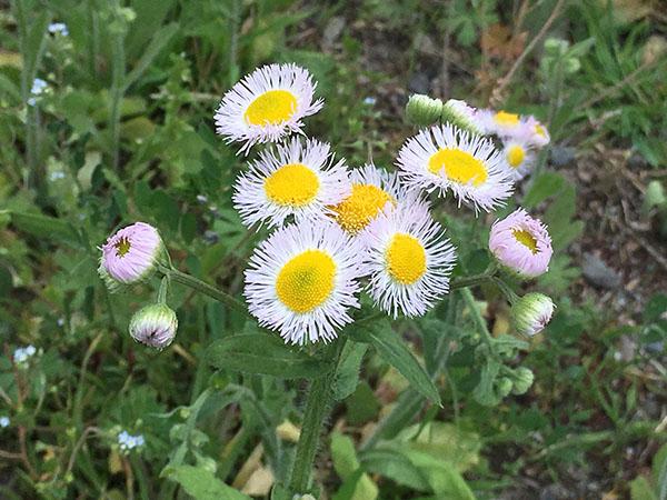 flower_8574a.jpg