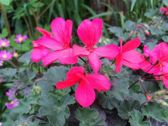 flower_8604a.jpg