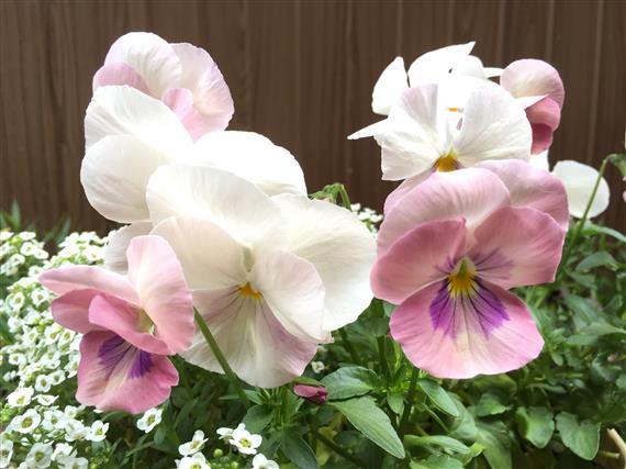 flower_8861a.jpg