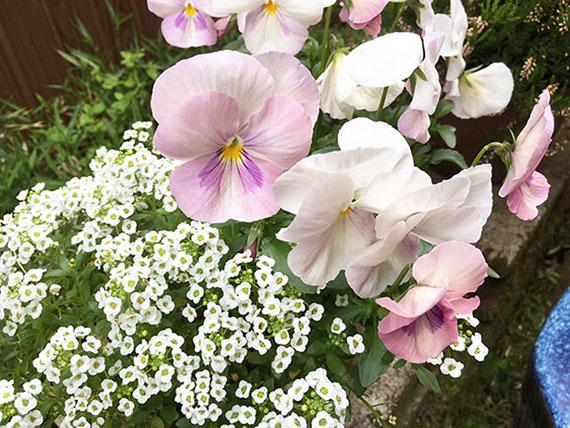 flower_8864b.jpg