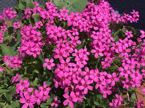 flower_9118c.jpg