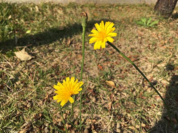flower_9512b.jpg