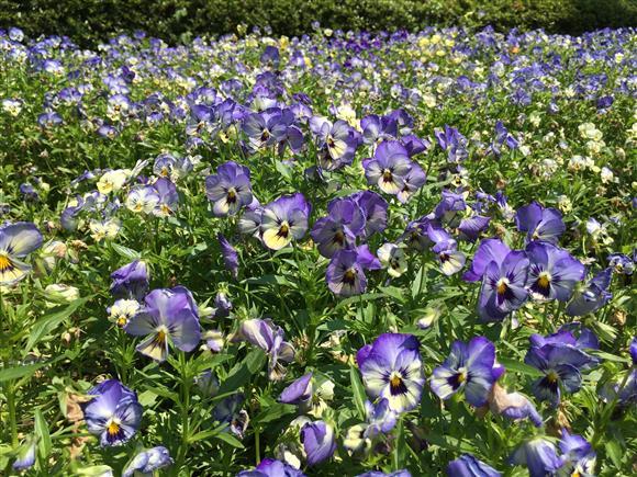 flower_9837.JPG