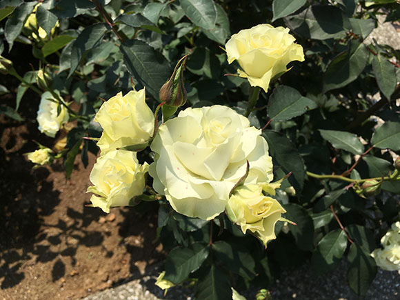 flower_9901b.jpg