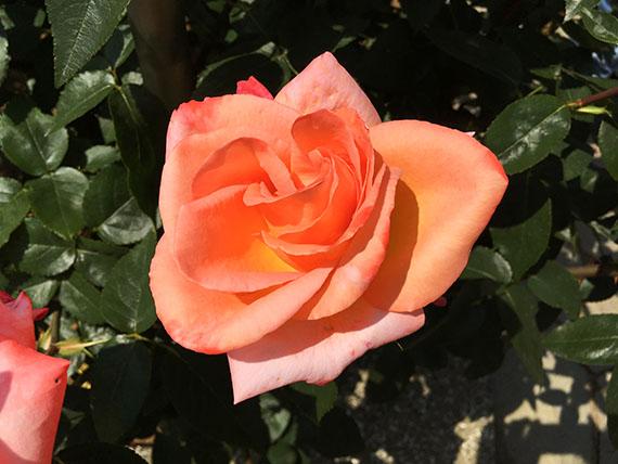flower_9904b.jpg