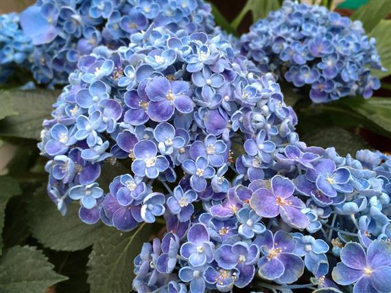 flower_9910a.jpg