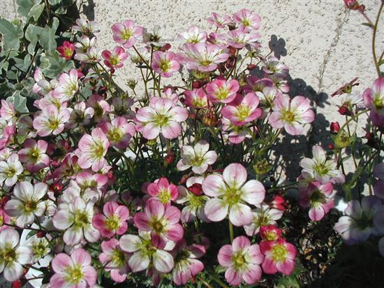 flower_P1010120a.jpg