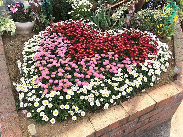 flowers_8296a.jpg