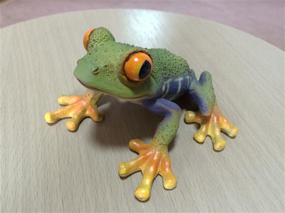 frog_9989a.jpg