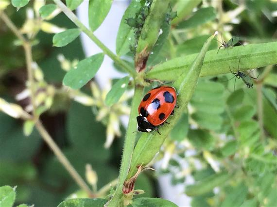 ladybug_293a.jpg