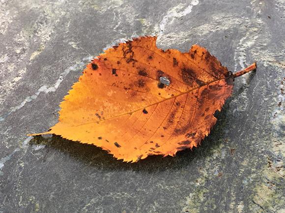 leaf_7325b.jpg