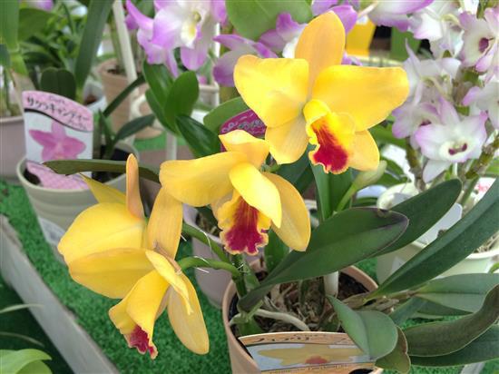 orchid_208b.jpg