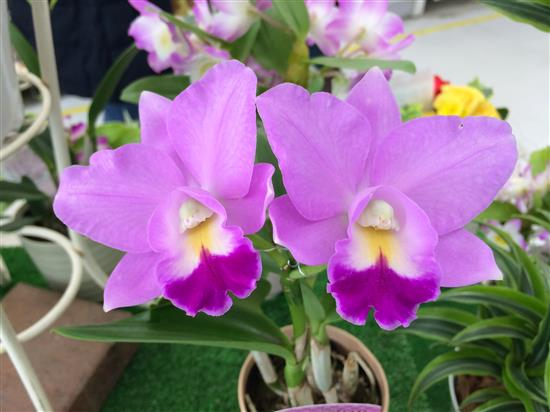 orchid_210a.jpg