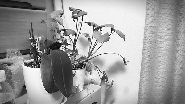 plant_6788b.jpg