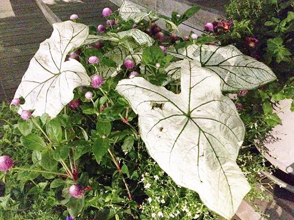 plants_2200c.jpg