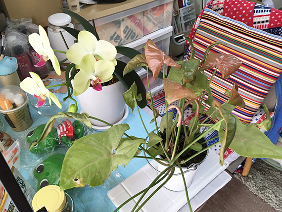plants_8035b.jpg