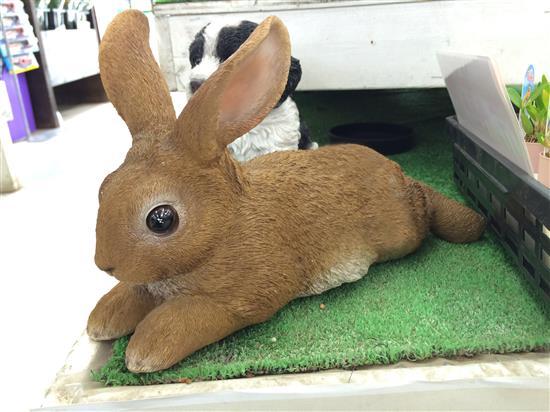 rabbit_169a.jpg