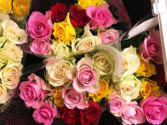 rose_5240b.jpg