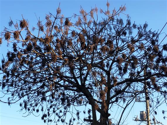 tree_3490a.jpg