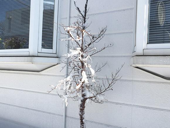 tree_3527b.jpg