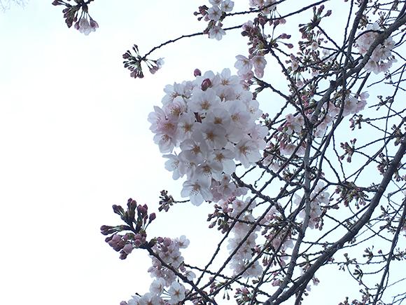 ueno_7088b.jpg