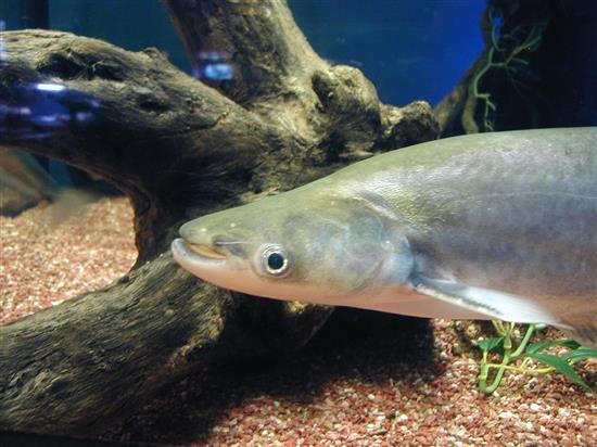 Fish_P1010043.JPG