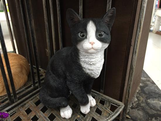 cat_090a.jpg