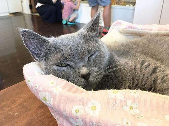 cat_5866b.jpg