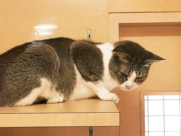 cat_5903b.jpg