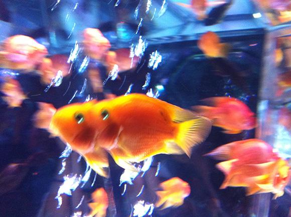 fish_8577b.jpg