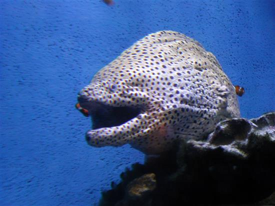 fish_P1010031a.jpg