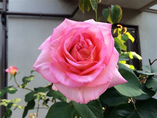 flower_.jpg