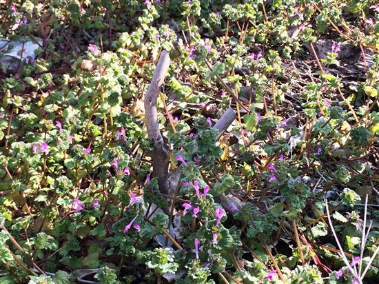 flower_002a.jpg