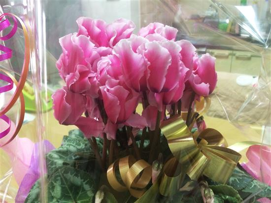 flower_004a.jpg