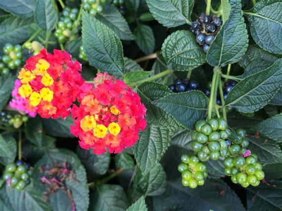 flower_024a.jpg