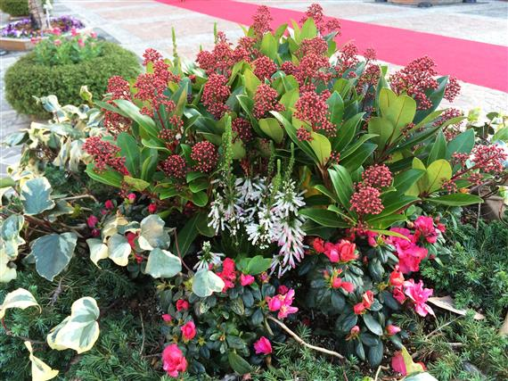 flower_033a.jpg