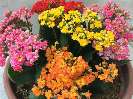flower_050a.jpg