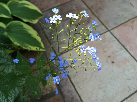 flower_051b.jpg