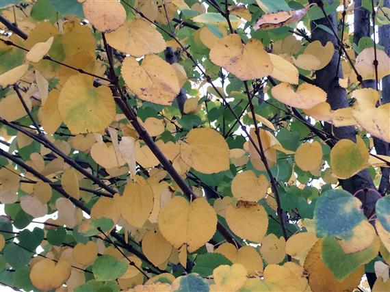 flower_059a.jpg