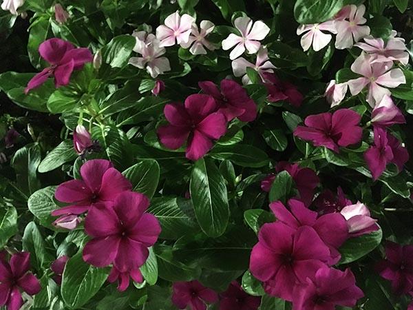 flower_0655a.jpg