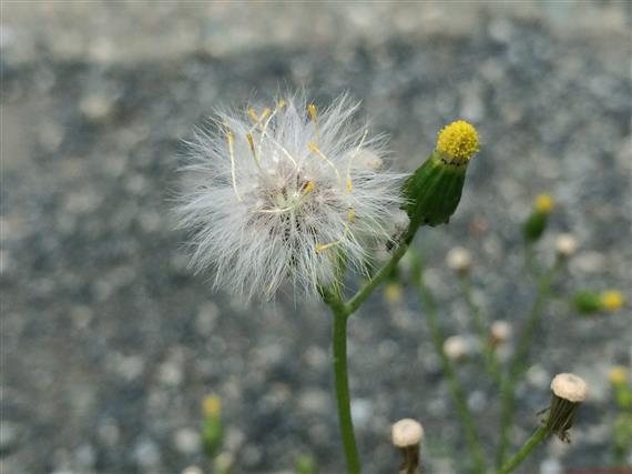 flower_066a.jpg