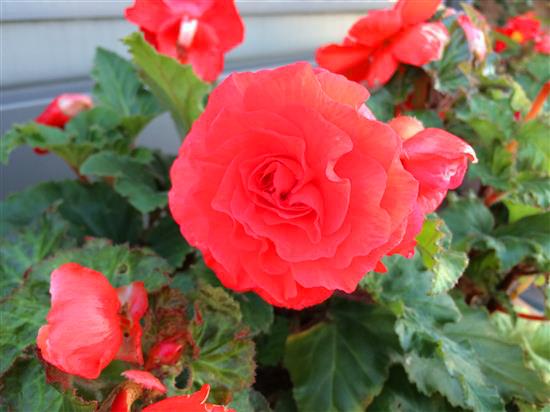 flower_067a.jpg