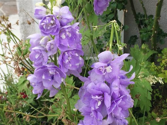 flower_078a.jpg