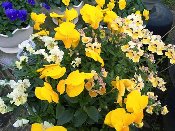 flower_0845c.jpg