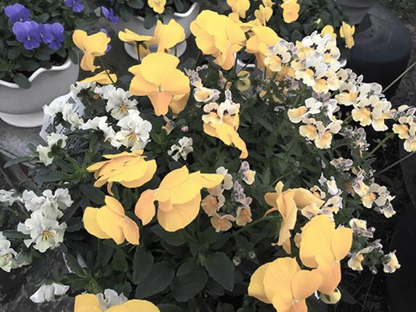 flower_0845d.jpg