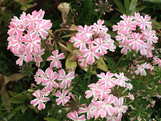 flower_093a.jpg
