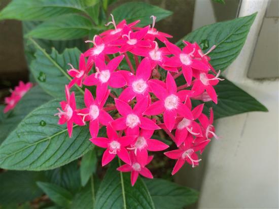flower_094a.jpg