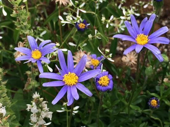 flower_095a.jpg